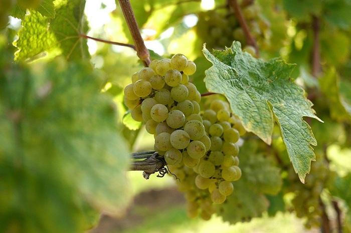 Premier Yadkin Valley Winery